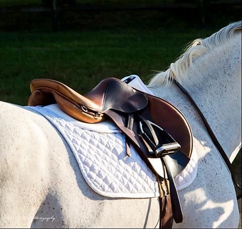 7306 white hunter saddle web